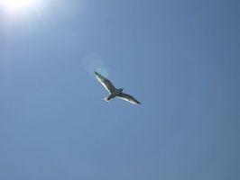 Seagull flying over