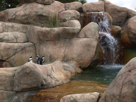 Penguins at New Zoo
