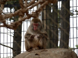 Monkey at the New Zoo